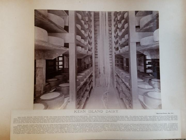 12 CEW, Kern Island Dairy, ca. 1887-88, unidentified collex 1500