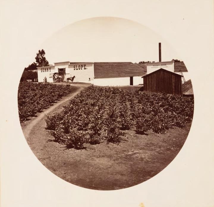 13 CEW, Sunny Slope, ca. 1880, HEH.jpg