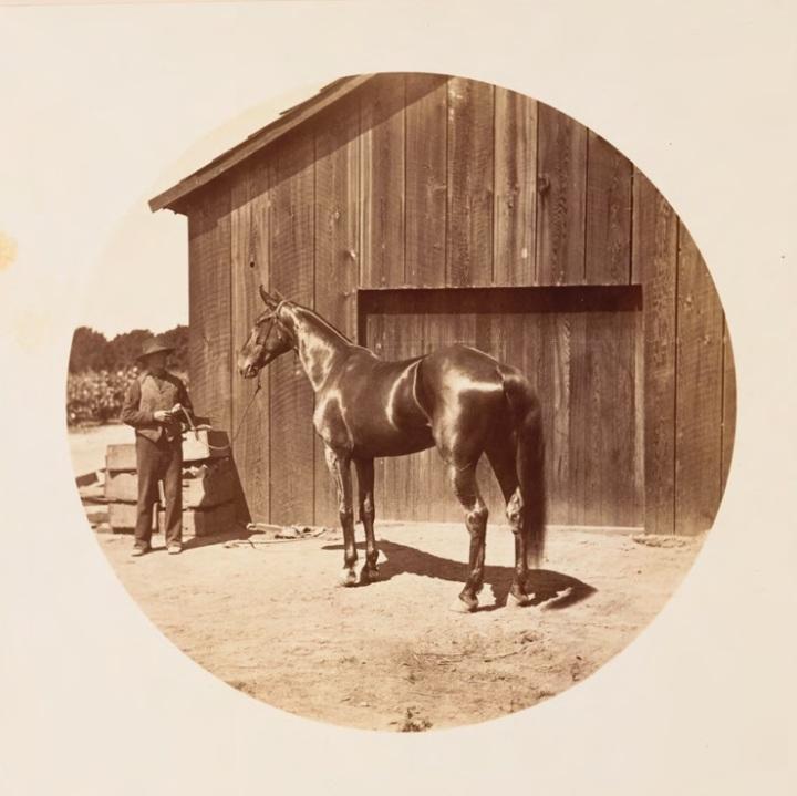 14 CEW, Sunny Slope, ca. 1880, HEH