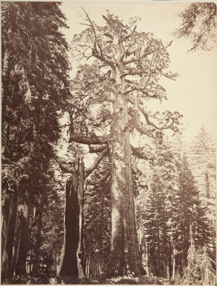2 CEW, The Grizzly Giant, 1865-66, CSL 1100