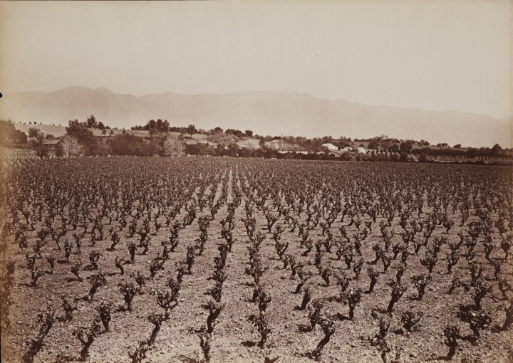 3 CEW, View from Lake Vineyard, B.D. Wilson Property, Los Angeles County, ca. 1877-80, Beinecke 1500