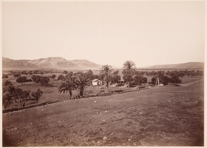 4 CEW, Olive and Palm Orchard, Mission San Diego de Alcala, San Diego County, ca. 1877, HEH 1500