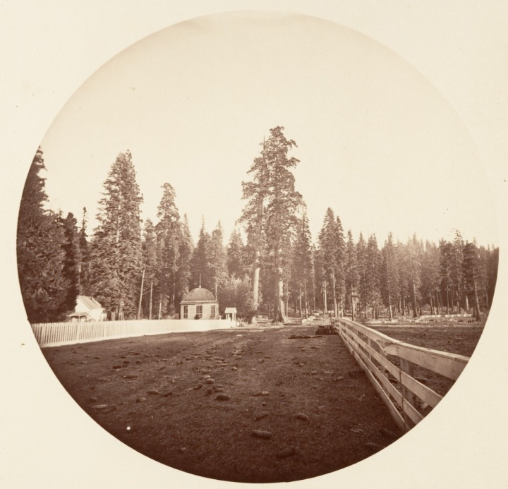 5 CEW, The Sentinels, Calaveras Grove, ca, 1878-81, Met