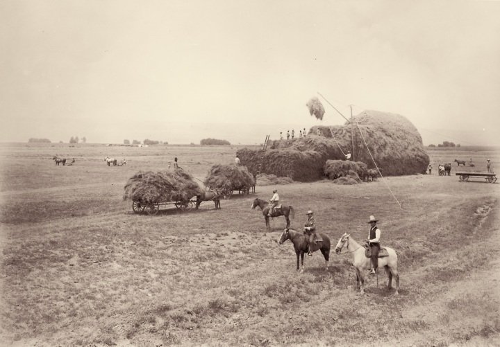 6 CEW, Haying at Buena Vista Farm, ca. 1886-88, HEH 1500
