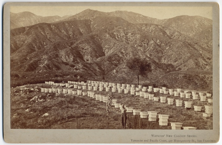 7 CEW, Apiary at Cogswell's Sierra Madre Villa, ca. 1877-80, CSL 1500.jpg